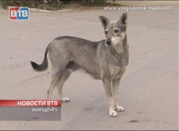 В Волгодонске торговали просроченными кормами для животных