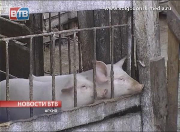 Ветеринары Волгодонска бьют тревогу