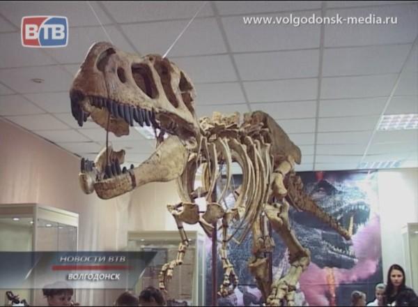 Назад на тысячи лет. В Волгодонск приехала коллекция Вятского палеонтологического музея