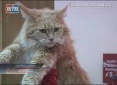 Выставка кошек самых необычных пород
