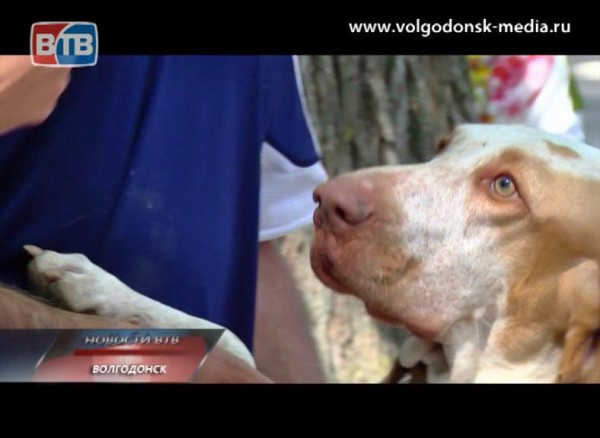 В Волгодонске состоялась выставка собак
