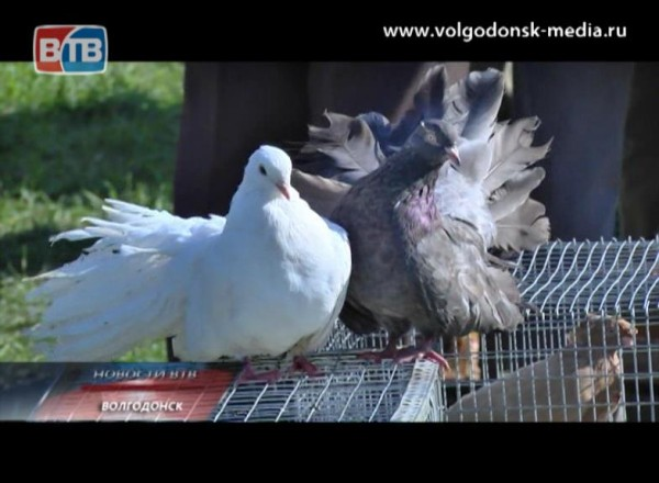 Волгодонске впервые прошла ярмарка декоративных илетных птиц