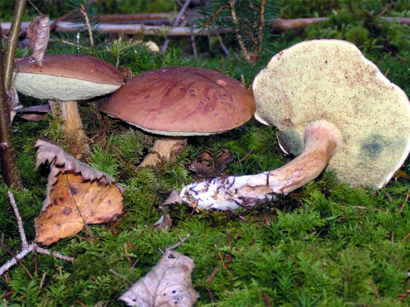 Волгодонск попал в список городов области, где были зафиксированы случаи отравления грибами