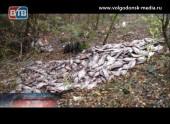 Браконьеры оставили килограммы рыбы тухнуть возле дороги