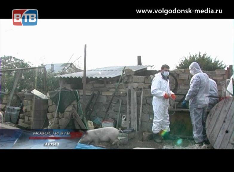 ВЦимлянском районе вследствие падежа двух десятков свиней объявлен режим Чрезвычайной ситуации