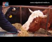 «Правильное» молоко от «правильных» коров