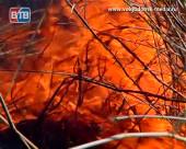 Все чаще в «дачных» пожарах гибнут люди