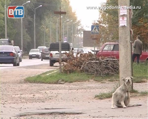 В Волгодонске началась стерилизация бездомных животных
