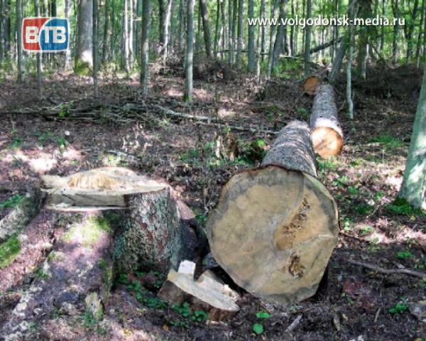В Цимлянском районе накажут виновных в незаконной вырубке лесных насаждений
