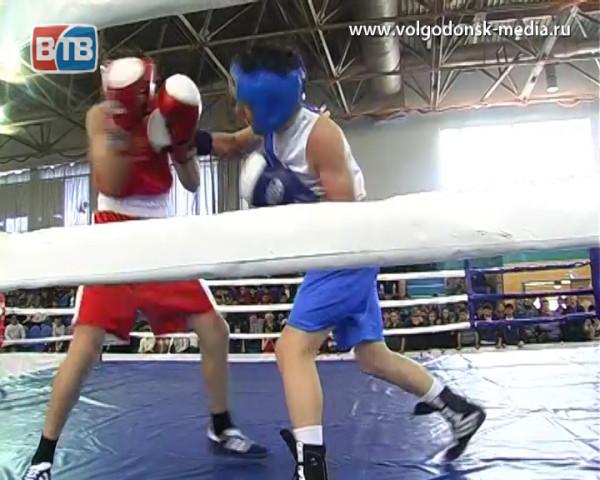 Волгодонские боксеры вернулись с Чемпионата Таганрога по боевым искусствам с наградами