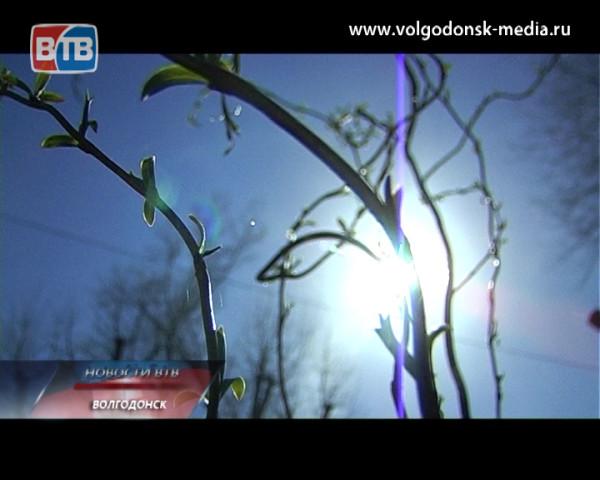 В ходе акции «Посади ивушку на «Ивушке» в детском лагере удалось высадить более 150 деревьев различных пород