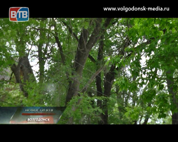 Волгодонск окутала пелена майского снега и наплыв аллергии