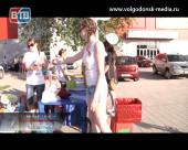 Волгодонские волонтеры провели первую акцию по сбору помощи для бездомных животных