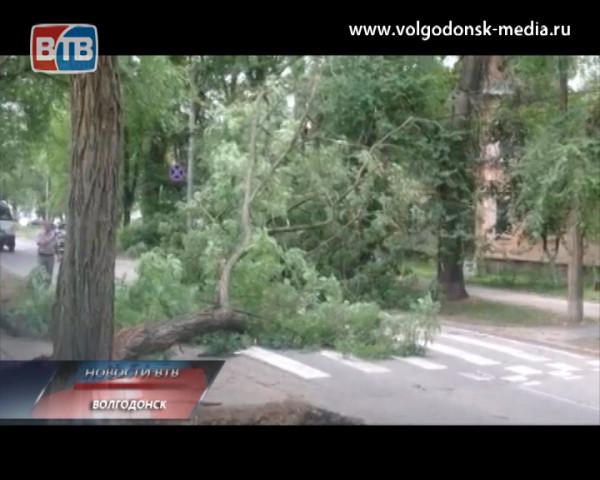 Прямо у здания мэрии на автомобиль свалилось дерево