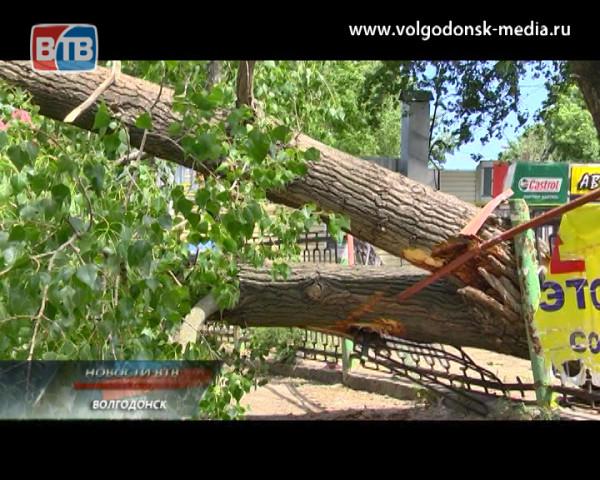 Тополь упал на проезжую часть в районе Центрального рынка