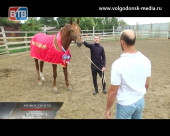 «Золотая лошадь» в Волгодонске