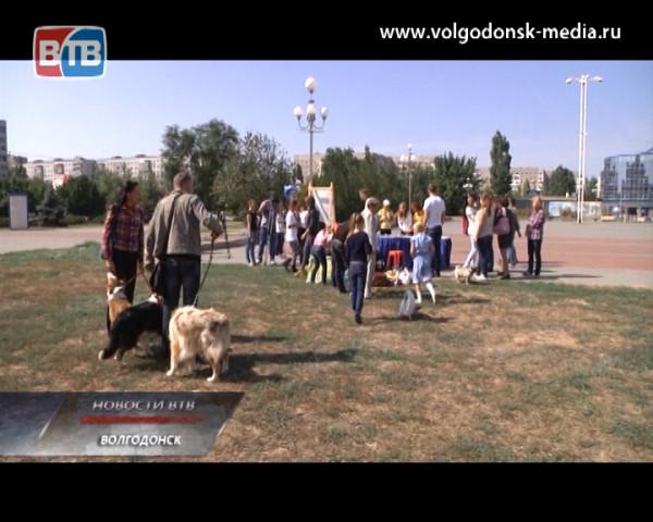 Вторая акция помощи бездомным животным