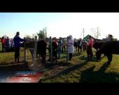 В Волгодонске и районах проходит вакцинация животных