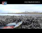 Грозит ли Волгодонску опасность остаться без воды?