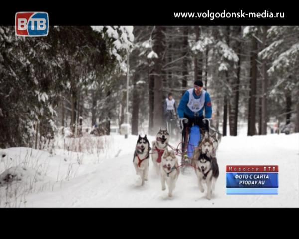Житель Волгодонска занял четвертое место в гонках на собачьих упряжках