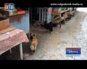 Ряд грубых нарушений в работе цимлянского рынка выявили ветеринарные инспекторы