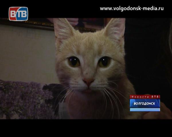 Делай добро! Телекомпания ВТВ продолжает рассказывать о четвероногих беспризорниках, находящихся в поиске нового дома и надежных хозяев