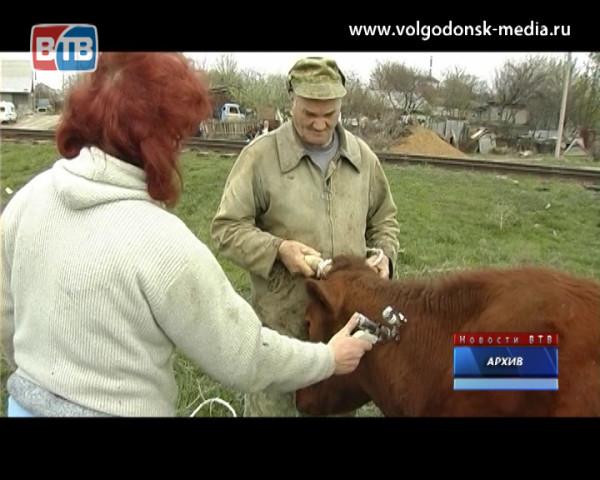 В Ростовской области стартовала весенняя диспансеризация животных