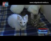 Сразу несколько брошенных и спасенных волонтерами Волгодонска котят ищут дом