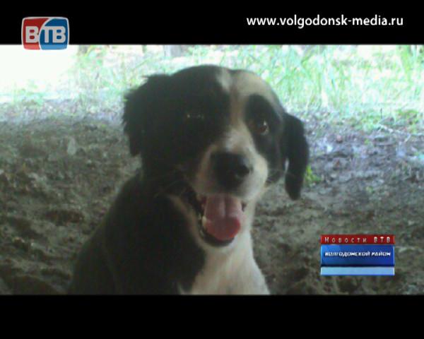 Единственный волгодонский пес на инвалидной коляске наконец обрел дом