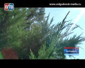 В пятницу и в выходные в Волгодонске и области ожидается аномальная жара