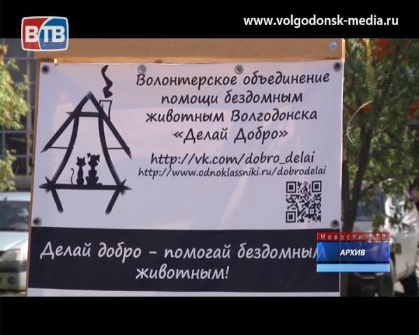 Уже завтра в Волгодонске пройдет очередная акция по сбору помощи бездомным животным. Посильную лепту может внести каждый