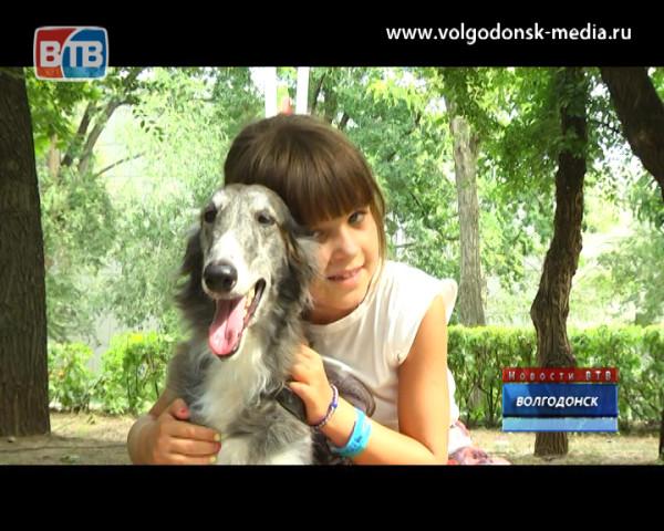В Волгодонске прошла третья акция по сбору помощи бездомным животным