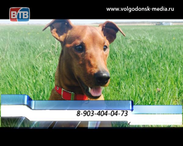 В Цимлянске пропала собака