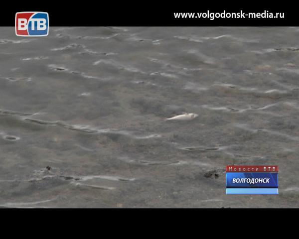Волгодонцы забили тревогу по из-за массового мора рыбы на берегу оросительного канала