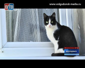Дом, где тепло только котам. Затянувшийся капремонт дома №97 по улице Ленина стал причиной срыва начала отопительного сезона
