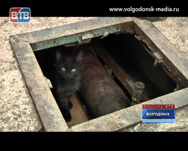 «В медсанчасти заживо муруют кошек» — крик о помощи зрительницы Новостей ВТВ