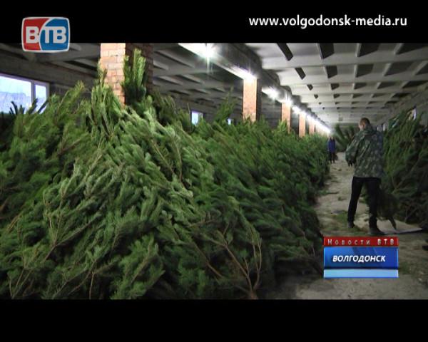 Распродажа елок по 350 рублей ждет горожан на Королева 1 «А»