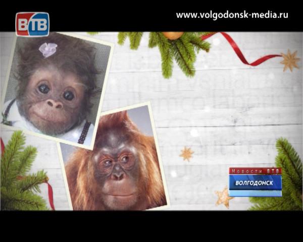 Творческая группа Новостей ВТВ отыскала в Волгодонске символ 2016-го