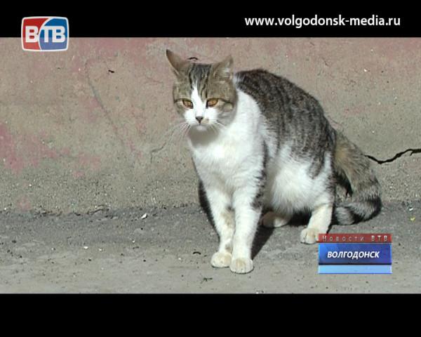 Домашние кошки, выброшенные на улицу нерадивыми хозяевами, ищут новый дом
