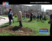 В Волгодонске стартовала акция «Дерево памяти», приуроченная к празднованию Дня Победы