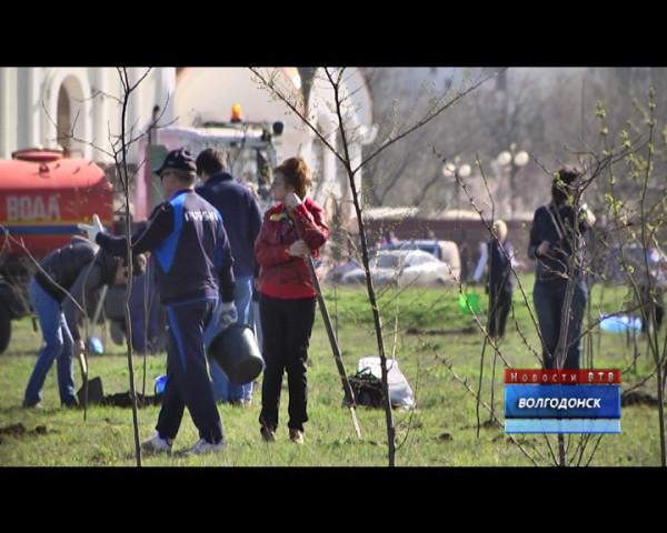 Волгодонск принял участие в областном Дне древонасаждения
