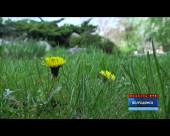 В ночь с 22 на 23 апреля в Ростовской области возможны заморозки