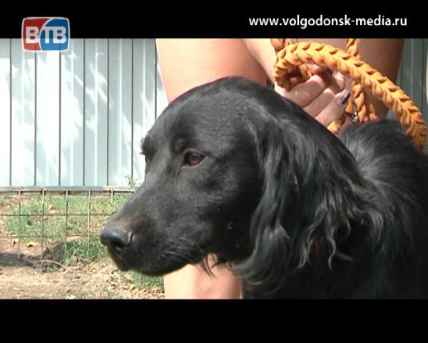 В Волгодонске впервые прошла выставка собак породы «Дворняга»