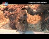 «Трогательный зоопарк». Под таким названием в Волгодонске открылась крымская выставка