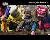 Стартовала акция «Посади 80 луковиц тюльпанов»