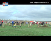 Зеленый подарок. Волгодонские «легкие» приросли тысячами деревьев и кустарников