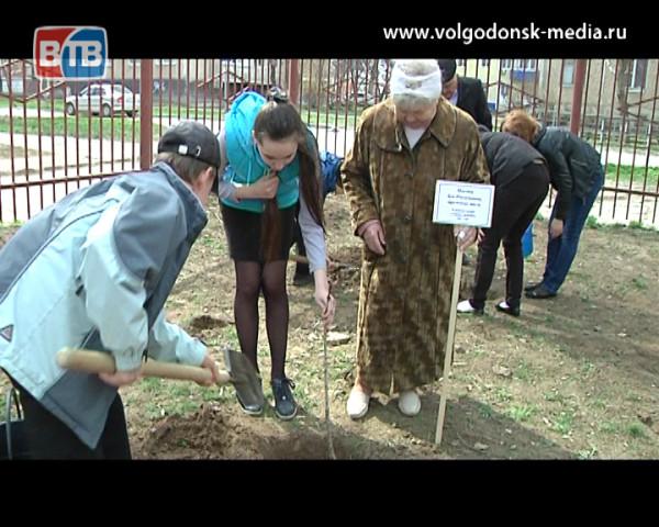 Патриотическая акция «Дерево памяти» продолжается. Именные деревья посадили и в седьмом микрорайоне