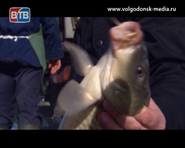 На Ростовской АЭС прошел выпускной у карпа