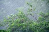 В Волгодонске объявлено штормовое предупреждение