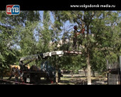 Волгодонск продолжают избавлять от деревьев